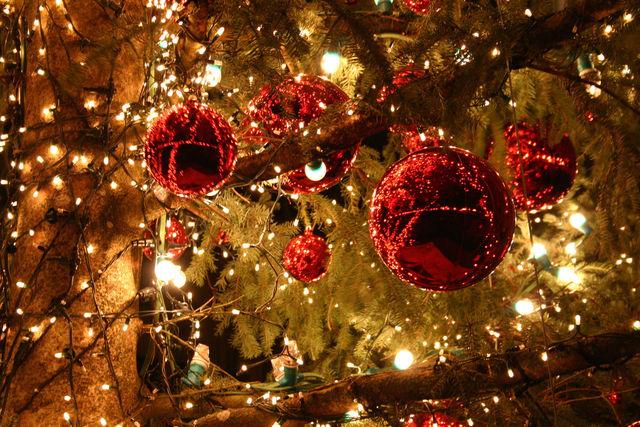Albero Di Natale Grande.Un Grande Albero Accende Il Natale Di Piazza Castello Torino Oggi