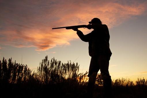"""Legge sulla caccia, le associazioni animaliste: """"Soddisfatte? Solo in piccola parte"""""""