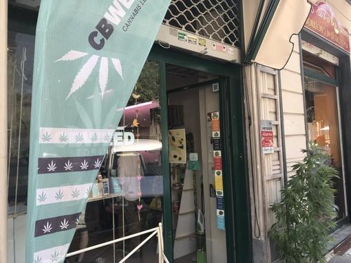 """""""Appendino tuteli i commercianti che vendono cannabis legale"""": la richiesta dei consiglieri del M5S alla sindaca"""