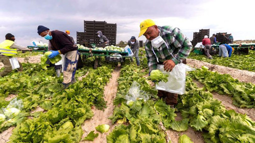 """Coldiretti: """"Stagionali, per le imprese agricole servono i voucher e la quarantena attiva"""""""