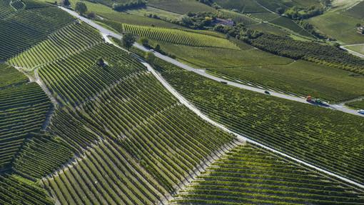 La rivista Tedesca Weinwirtschaft premia la cantina Terre del Barolo come la migliore cooperativa italiana 2020