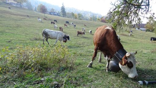 Pascolamento in quota: dalla Regione Piemonte: arriva la proroga fino al 15 novembre 2020