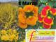mimose manifesto