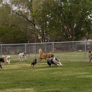 area cani - foto di archivio