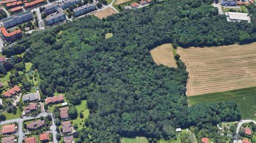Il M5S Alpignano promuove una campagna per valorizzare il verde pubblico