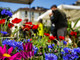 In piazza Vittorio torna Agriflor: il mercato delle eccellenze florivivaistiche piemontesi