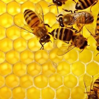 """Siccità, l'allarme di Coldiretti: """"A rischio miele e colture Made in Piemonte"""""""