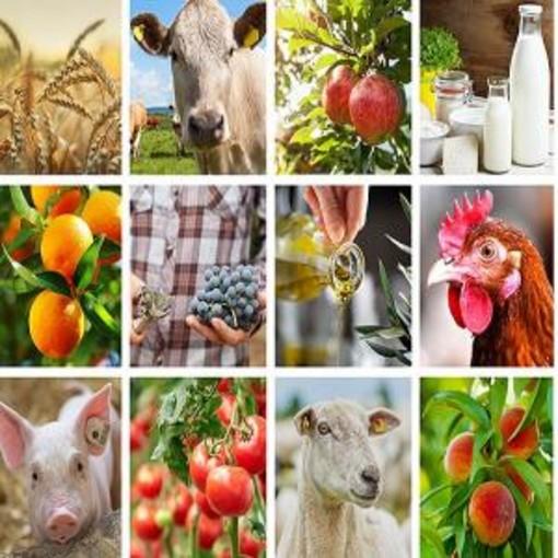 Agricoltura: la Commissione pubblica un elenco di potenziali regimi ecologici