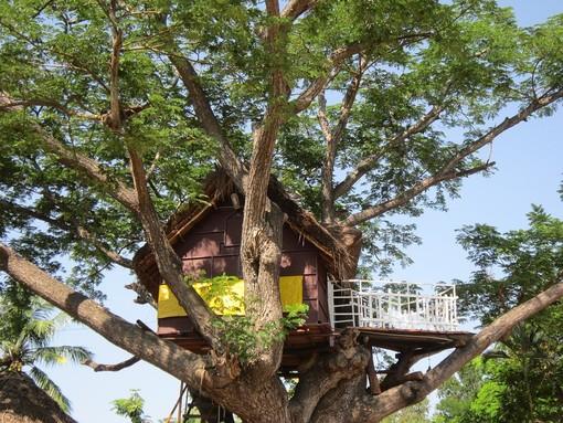 Dormire in una casa sugli alberi, un'esperienza insolita che coinvolge grandi e piccoli!