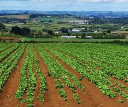 Green Deal europeo: la Commissione avvia una consultazione pubblica sulla nuova strategia UE per il suolo