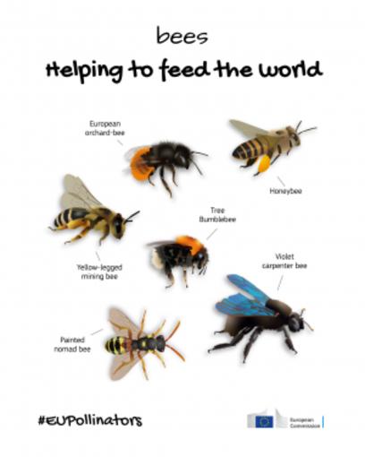 Biodiversità: la Commissione inaugura Pollinator Park