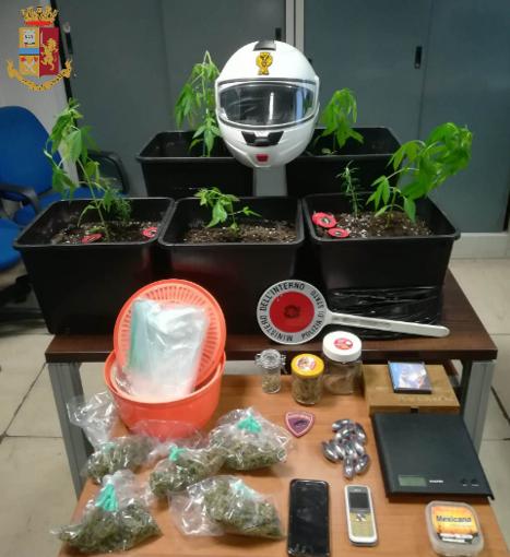 Piantine di marijuana sul balcone, arrestato 41enne con precedenti a carico
