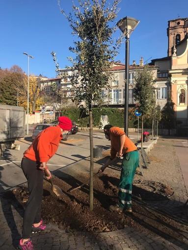 Piazza Santa Croce a Pinerolo ha 9 nuovi alberi da martedì