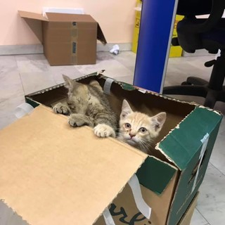 Gattini in un cassonetto a Pinasca ritrovano la famiglia