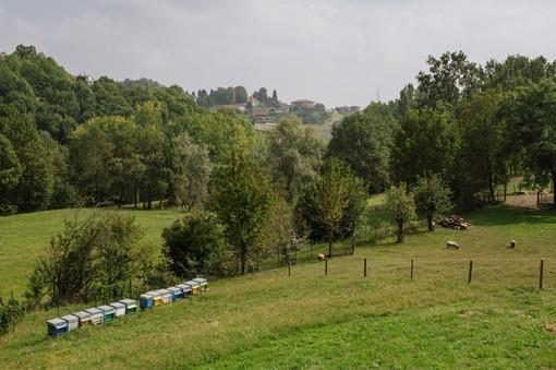 """Coldiretti Piemonte e Fase 3: """"Al via centri estivi nelle fattorie didattiche per imparare in sicurezza"""""""