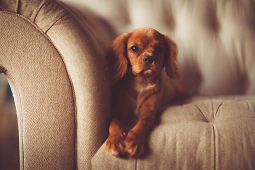 Animali in condominio: il regolamento non può vietarne il possesso