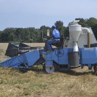 """Coldiretti Piemonte e la trebbiatura del grano: """"Puntare su nuovi accordi di filiera con l'agroindustria virtuosa"""""""