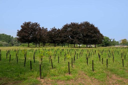 Giornata nazionale degli alberi: prosegue il grande piano di forestazione urbana di Torino