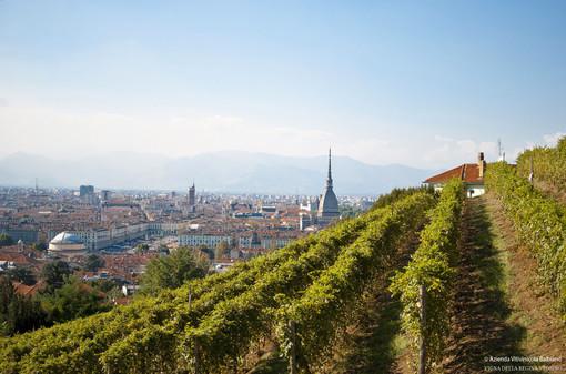 Vino e Covid: a Torino la vendemmia si fa sul web, rimandando le degustazioni a tempi migliori