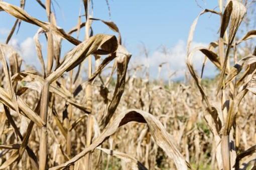 """Coldiretti Piemonte: """"L'acqua è manna dal cielo per le semine primaverili"""""""