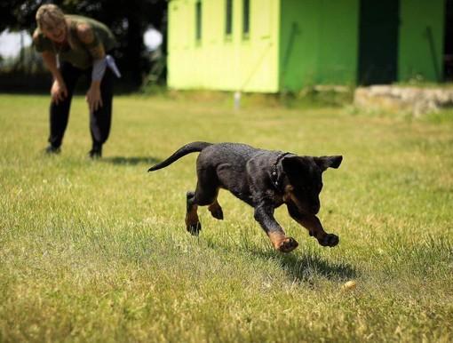 """""""Un'area cani con percorsi Agility in via Monteponi"""": la proposta della Circoscrizione 2"""