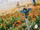 Acquistare online sistemi di irrigazione, ecco i pro e contro