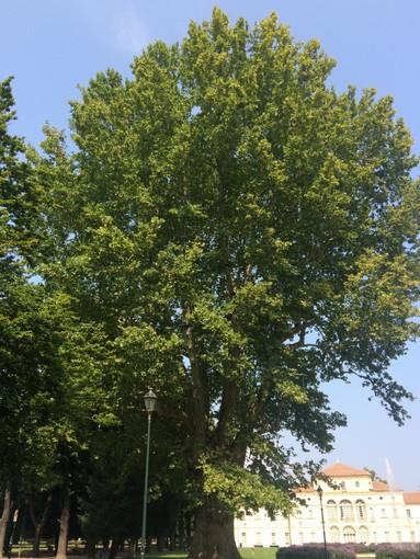 Torino e i suoi alberi: antidoto all'emergenza ambientale e custodi del passato