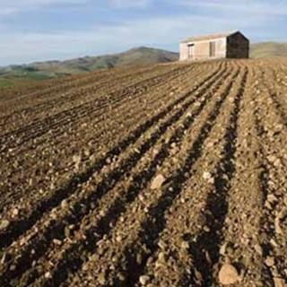 """Coldiretti e la Giornata dell'ambiente: """"Preservare la biodiversità Made in Piemonte"""""""