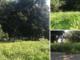 Erba alta in Circoscrizione 3, lo sfalcio delle aree verdi procede a macchia: la situazione