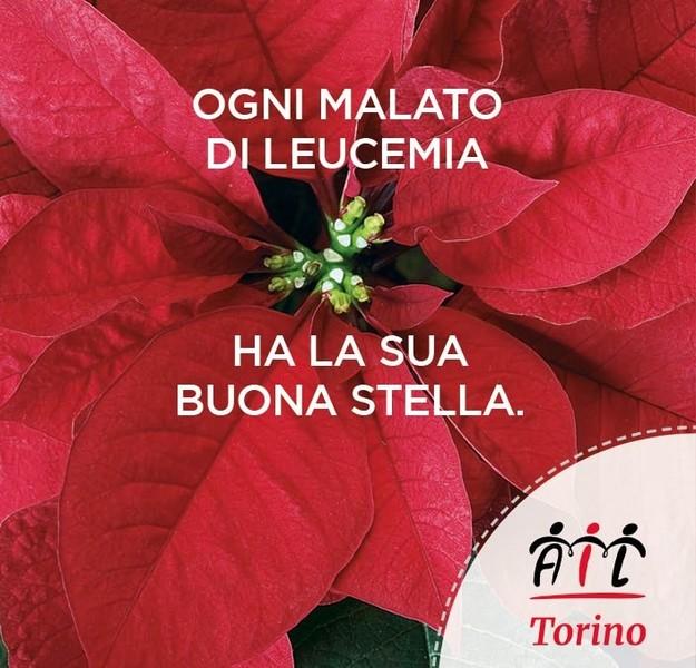 Stella Di Natale Ail 2021.Ail Al Via La Campagna Natale 2020 L Emergenza Non Ferma La Solidarieta Torino Oggi