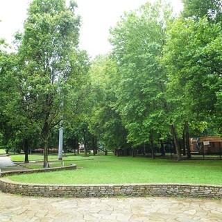 """A Torino la giustizia climatica ha un nuovo alleato con """"Plant for the planet"""""""