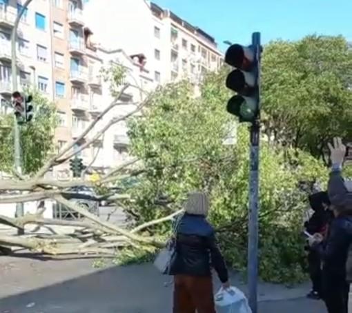 Raffiche di vento a Santa Rita: cade un albero in via Tripoli e travolge un'auto parcheggiata [VIDEO]