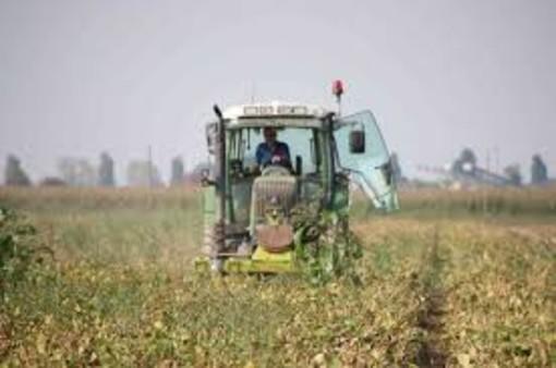 "Agricoltura, i sindacati: ""Indispensabile rinnovare i contratti provinciali"""