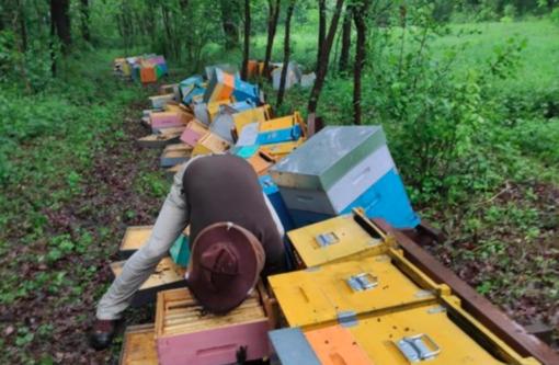 Milioni di api morte e tutte le casette distrutte: in una giornata raccolti 57 mila euro per l'apicoltore Mattia