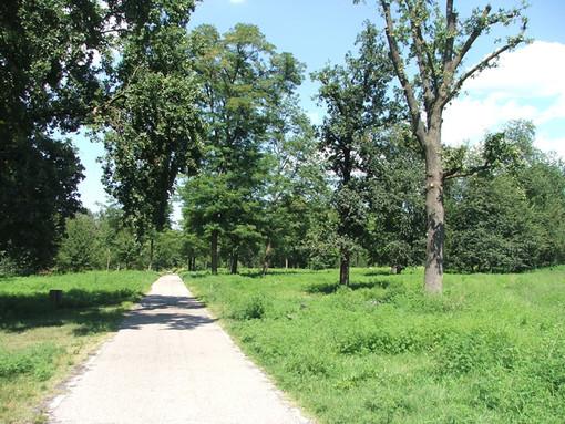 Coronavirus, a Nichelino il Comune chiude il Boschetto e tutti i parchi della città