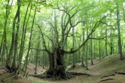 Bosco, foresta