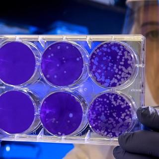 Coronavirus, altri 53 decessi in Piemonte. Il totale sfiora i 600