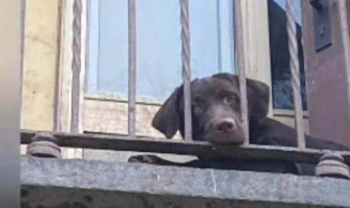 """Cane """"recluso"""" su un balcone a Torino: sanzionata la proprietaria"""