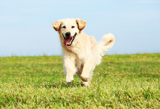 Moncalieri, un aiuto per i proprietari di cani nei giorni dell'emergenza coronavirus