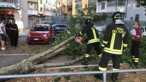 """Albero caduto in Corso Montegrappa, Morando (Lega): """"Qual è lo stato di salute degli alberi in Circoscrizione 4?"""""""