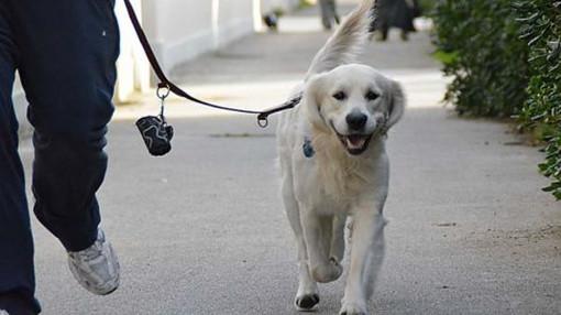 Il Comune di Nichelino cerca volontari per i cani delle persone in quarantena