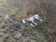 Lupa morta a Gassino: l'autopsia stabilirà le cause del decesso
