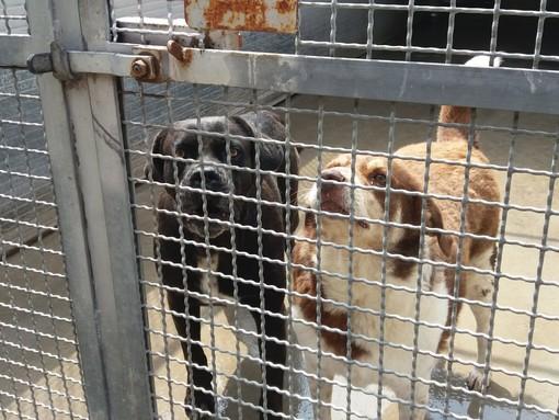 """Nel rifugio di Torino, cani e gatti in cerca di casa: """"Adottateli d'estate: le ferie aiutano a conoscervi"""""""