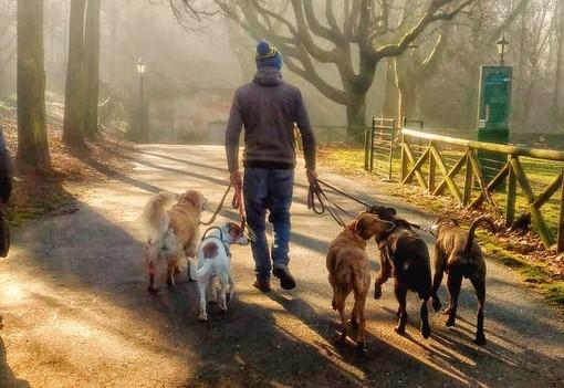 """Coronavirus, l'appello dei dog sitter: """"Lasciateci ripartire, il nostro lavoro è essenziale"""""""