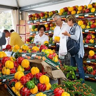 Carmagnola, dal 3 settembre il peperone fa sul serio: al via la vera e propria Fiera nazionale