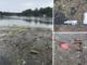 Il Po è una discarica a cielo aperto: un tappeto di plastica inquina le acque del fiume