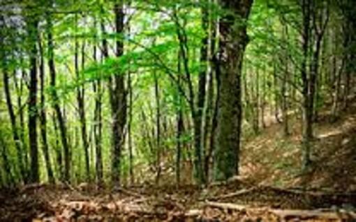 """Uncem: """"Positivo lo sblocco anche in Piemonte della attività silvicolturali"""""""