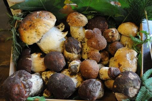 Attivo da lunedì 27 il controllo commestibilità funghi nell'Asl di Torino