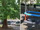 Giardini Allievo, i cittadini chiedono la riparazione dell'altalena e la potatura dell'albero