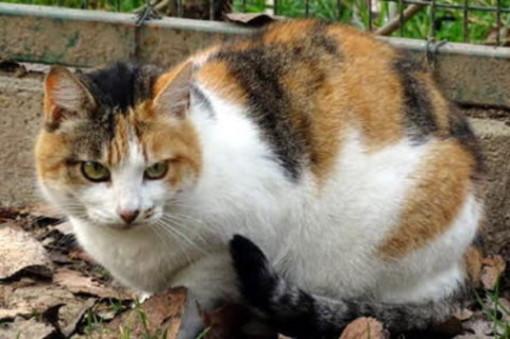 gatto - foto di repertorio